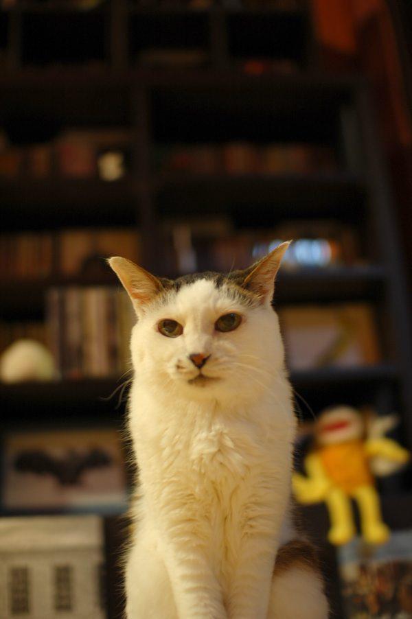 うちの招き猫