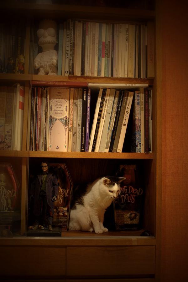 玩具棚に陳列されるチィさん