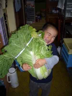 ♪ばあちゃんが作った『Bigサイズの白菜!!』♪