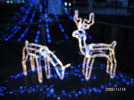 Pocket 2009クリスマスイルミネーション
