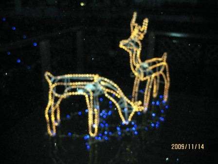 Pocket 2009クリスマスイルミネーショントナカイ