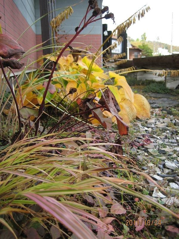 紅葉すすむ庭のあちこち