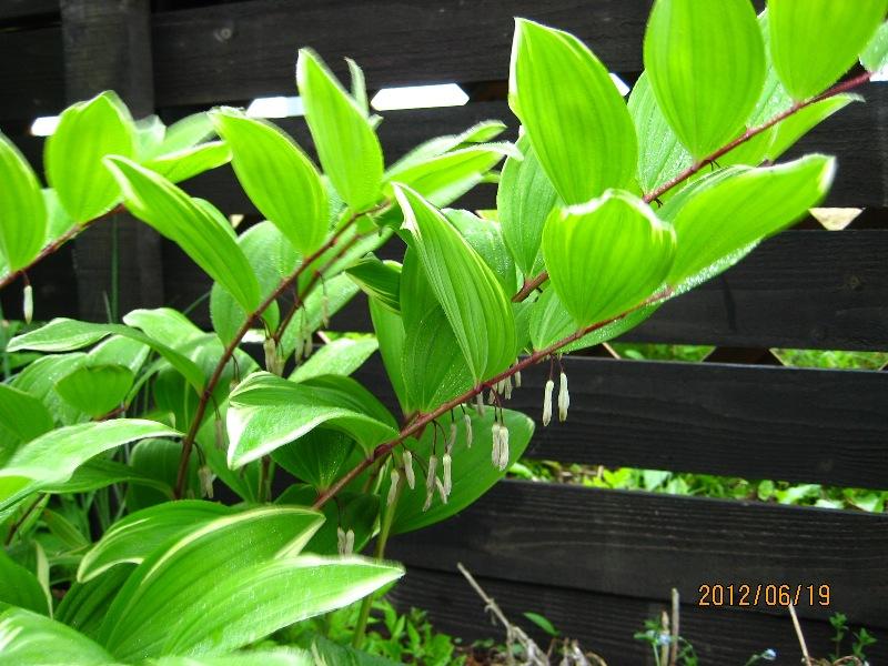 大きく育った緑の葉