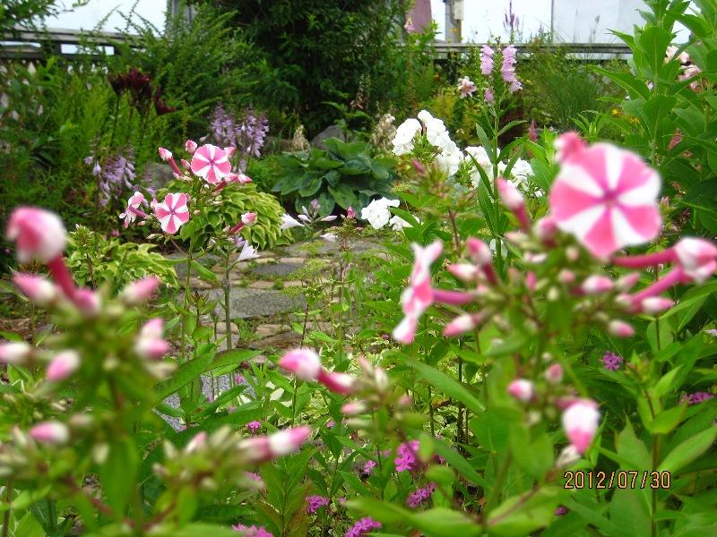 草花で隠れた小道