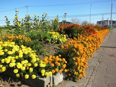 町内会花壇