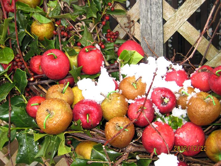 雪のりんご