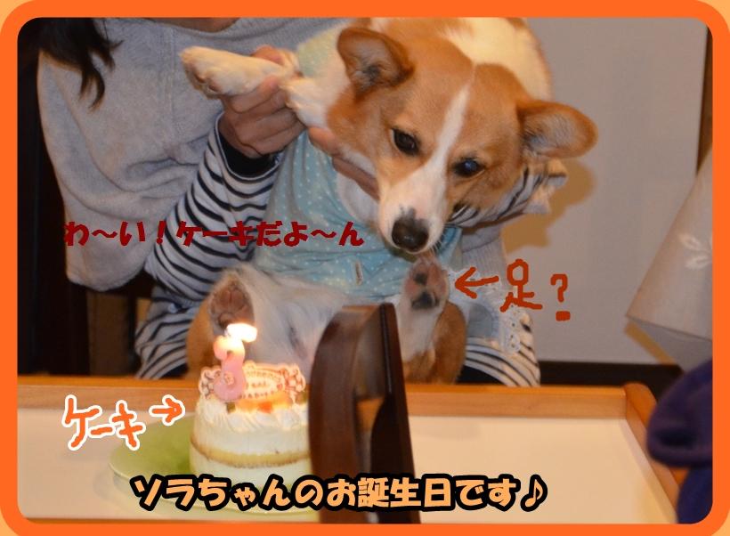 ケーキだよう.JPG