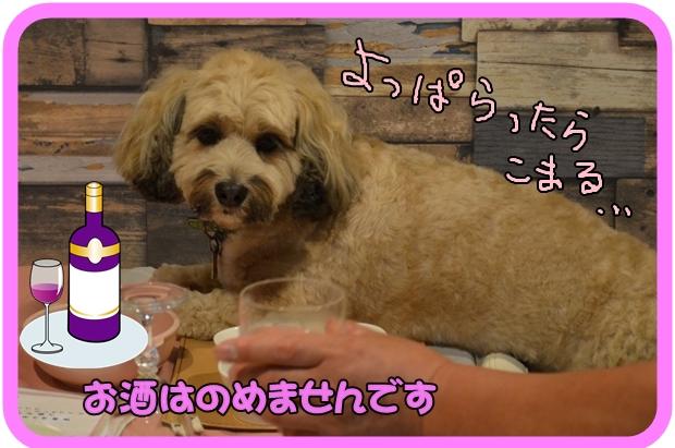 9月14日馬場ココアちゃん.JPG