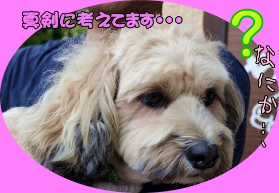 9月14日馬場ココアちゃん2.JPG