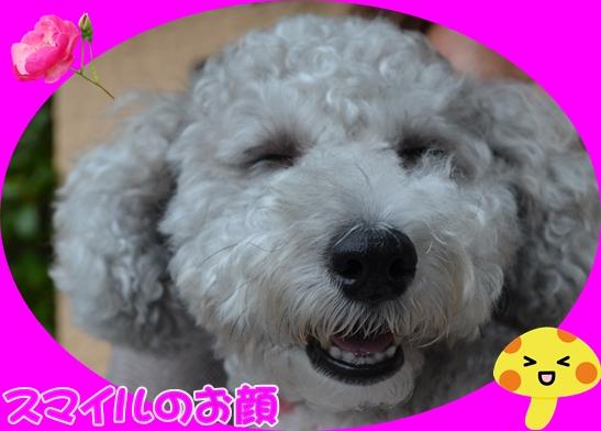 9月14日馬場ひめちゃん2.JPG
