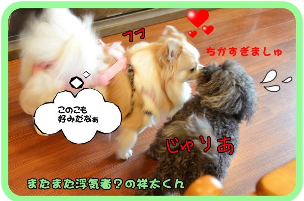 9月6日入江祥太ちゃん.JPG