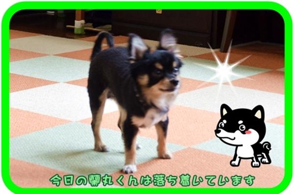 9月25日藤井蘭丸ちゃん2 .JPG