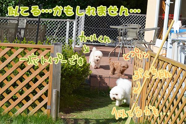 10月13日松本ぷくちゃん2.jpg