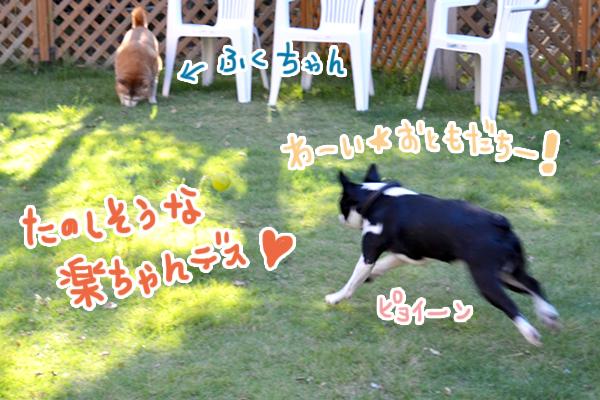 9月27日加藤楽ちゃん3.jpg