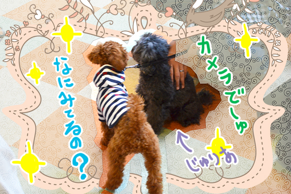 10月19日岡本あずきちゃん2.jpg