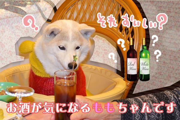 11月13日板垣ももちゃん.jpg