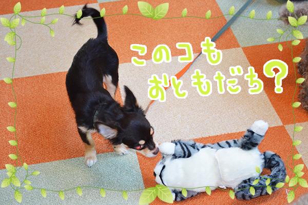 11月17日関しんのすけちゃん3.jpg
