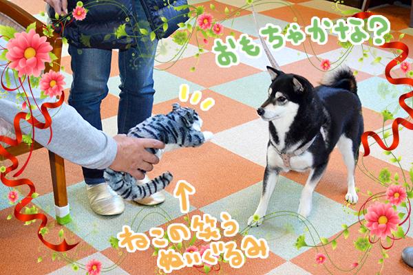 11月22日金沢ももちゃん.jpg