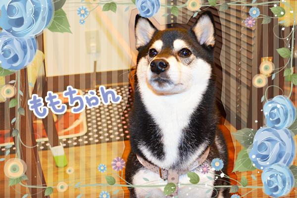 11月22日金沢ももちゃん2.jpg