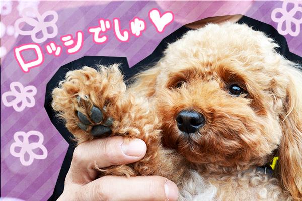 11月24日井出ロッシちゃん2.jpg