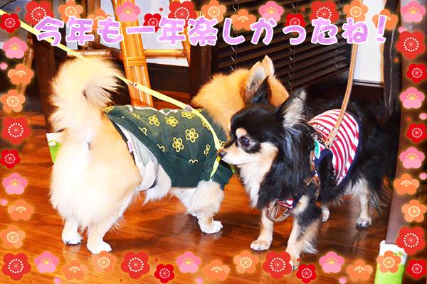 12月31日今井りくちゃん2.jpg