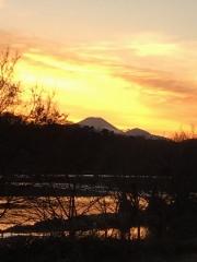 河川敷の木立の先に富士山を見る