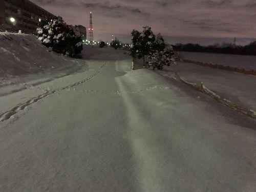 積もった雪が美しい