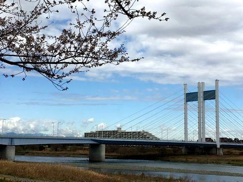 桜と是政橋