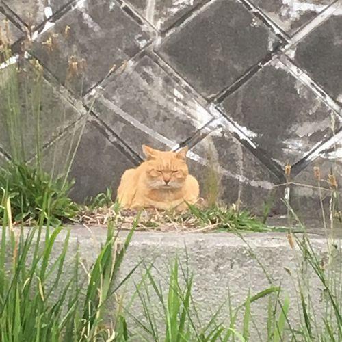 多摩川土手の猫です。