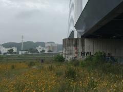 橋の下の花園