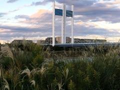 荻の穂と是政橋
