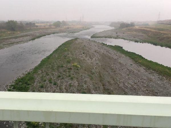 川の洲に緑が映えます
