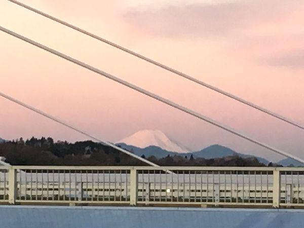 桜色に染まる富士山