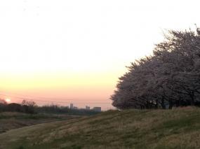 多摩川遠望