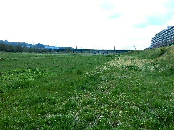 緑で覆われつつある河川敷