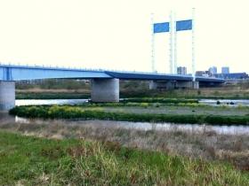 是政橋の周りは花盛り