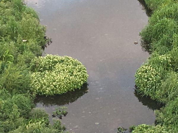 水辺の花園