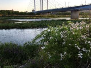 川のほとりに花々が咲き乱れる
