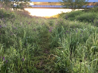 草藤の茂みを進む 「草藤の小径」と名付けよう