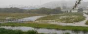 15:28 河川敷の平地も浸水してきて、しだいに緑地が水浸しとなってくる