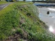 土手に残る流水の跡 遊歩道ぎりぎりまで浸水した