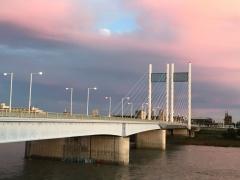 是政橋は桜色