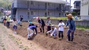 おやじ農園で作業する親子たち