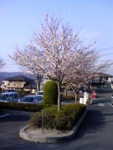 東広島市立図書館の桜 2009.3.31