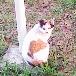 kan 千葉港の猫1