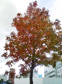 081113北口の紅葉