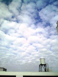 081201うろこ雲1
