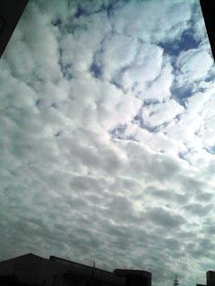 081201うろこ雲2