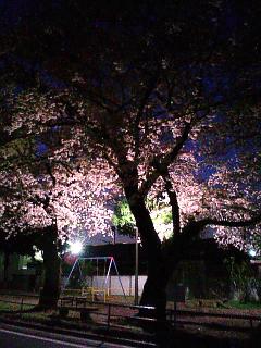 090406 弁天公園 夜桜