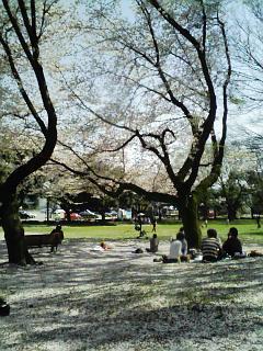 千葉公園090409_昼下がり